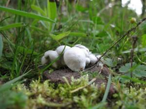 White Ground Fungi