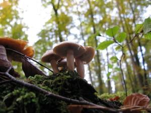 Four white fungi