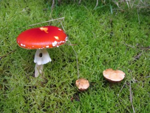 Fungi of the Ottertal - 2