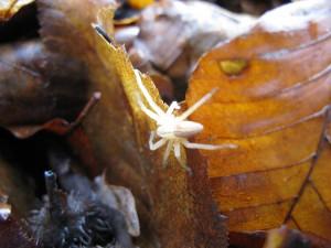 Yellow spider (unfortunately overexposured)