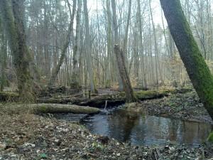 Deadwood dams up the Heilbach