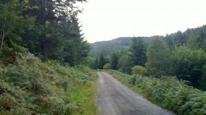 Old Ruhestein Road