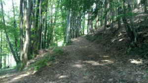 Uphill path near Bosenstein