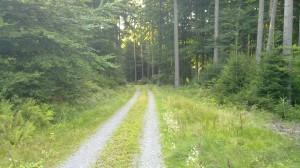 Downhill track near Rote Lache