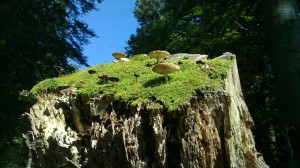 Tree stub hosting other beings