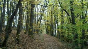 Hiking trail near Slevogthof