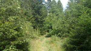 Rote Lache - downhill trail