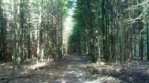 Rote Lache - downhill path