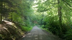 Rote Lache - downhill track