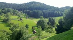 Black Forest Hovels