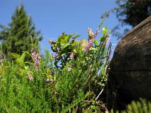 A bilberry