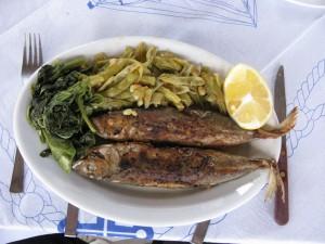 Medium sized fish