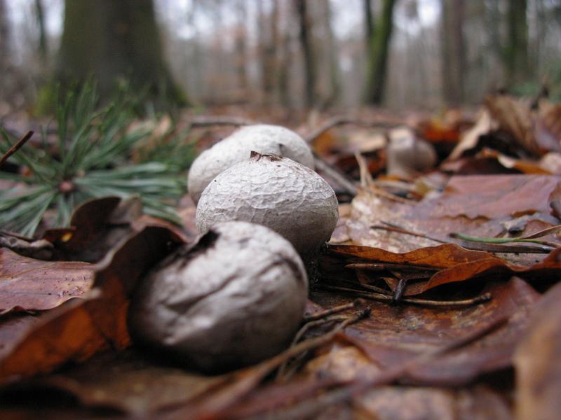 fungi_img_0336.jpg