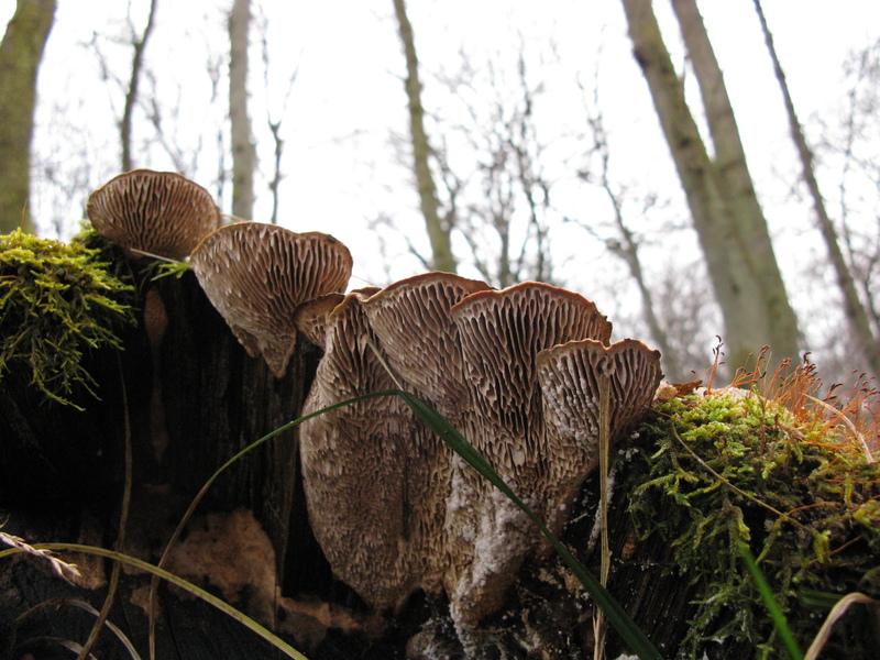 fungi_img_0346.jpg