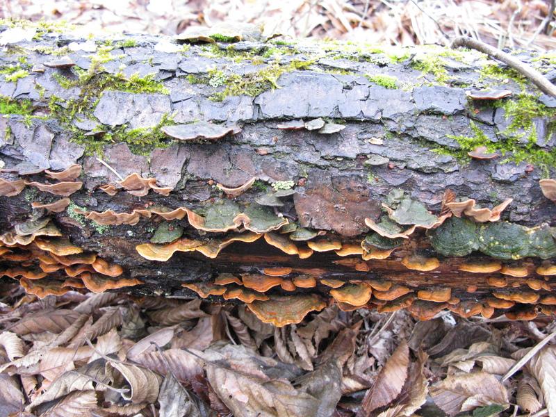 fungi_img_0365.jpg