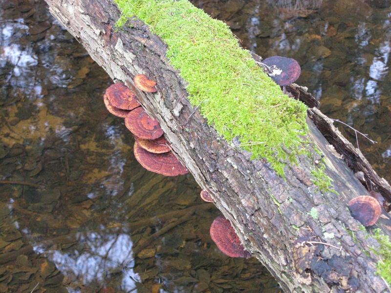 fungi_img_0371.jpg