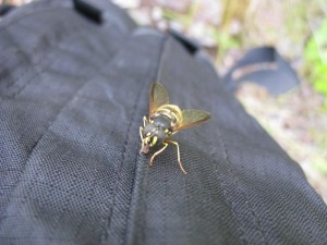 Kind of Wasp