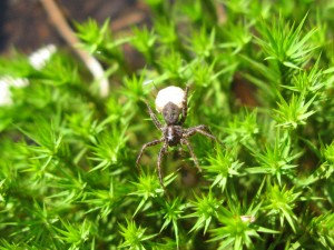 Spider in Moss